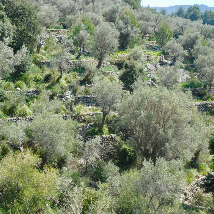 travel with kids children Soller Mallorca Spain olive groves