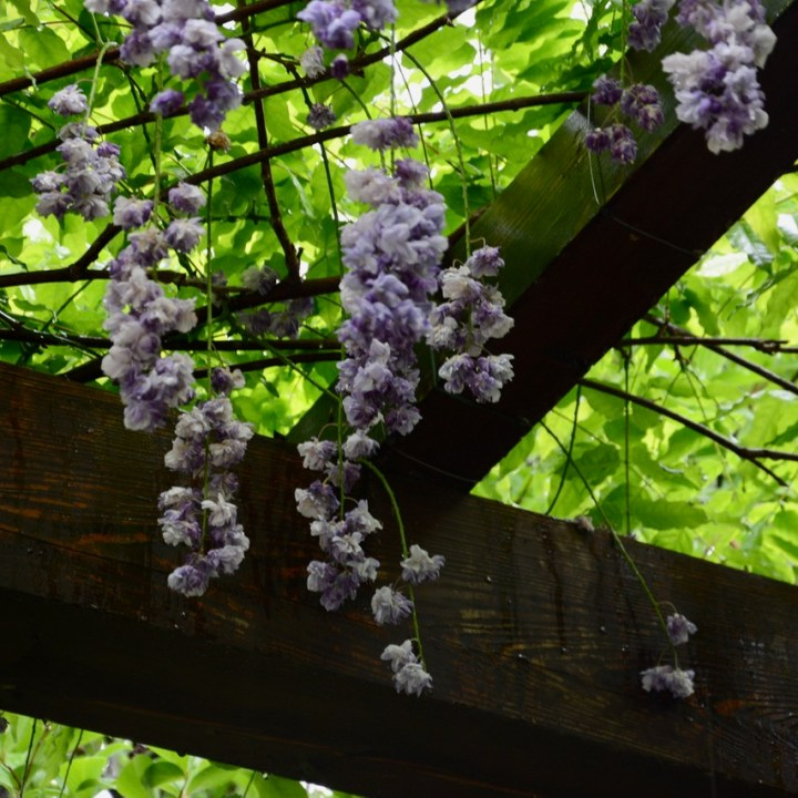 travel with kids children villa taranto botanical garden pallanza lago maggiore wisteria walk