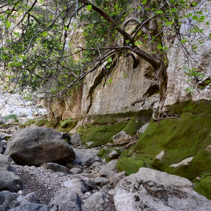 travel with kids children soller mallorca spain hiking torrent de pareis moss