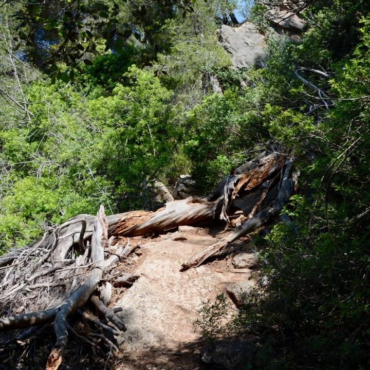 travel with kids children soller mallorca spain coastal hike ben's d'avall to cala deia tree trunk