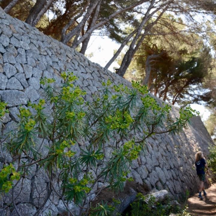 travel with kids children soller mallorca spain coastal hike ben's d'avall to cala deia stone wall