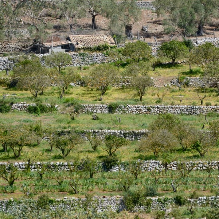 travel with kids children soller mallorca spain hiking cala tuent baltix d'avall orange grove