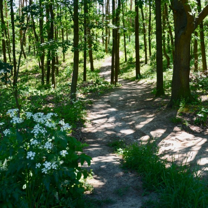 travel with kids prague forest path