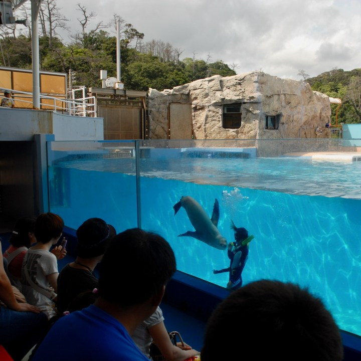japan with kids shimoda aquarium seal show