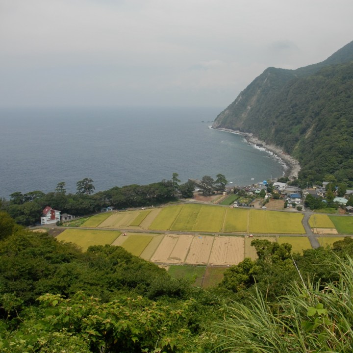 heda japan with kids izu peninsular rice field