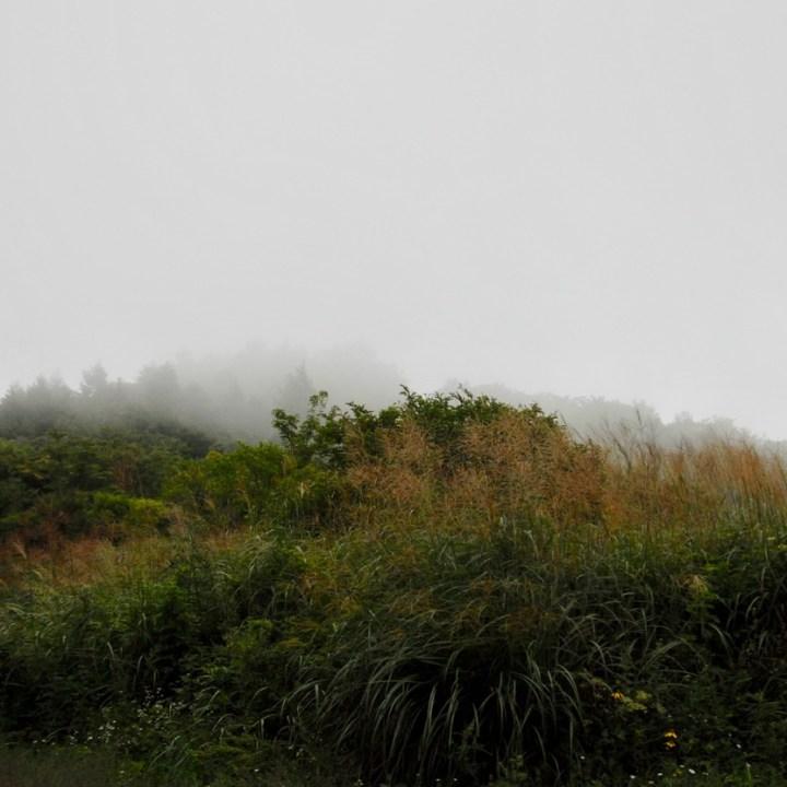 travel with kids japan fujiyoshida hiking pampas grass