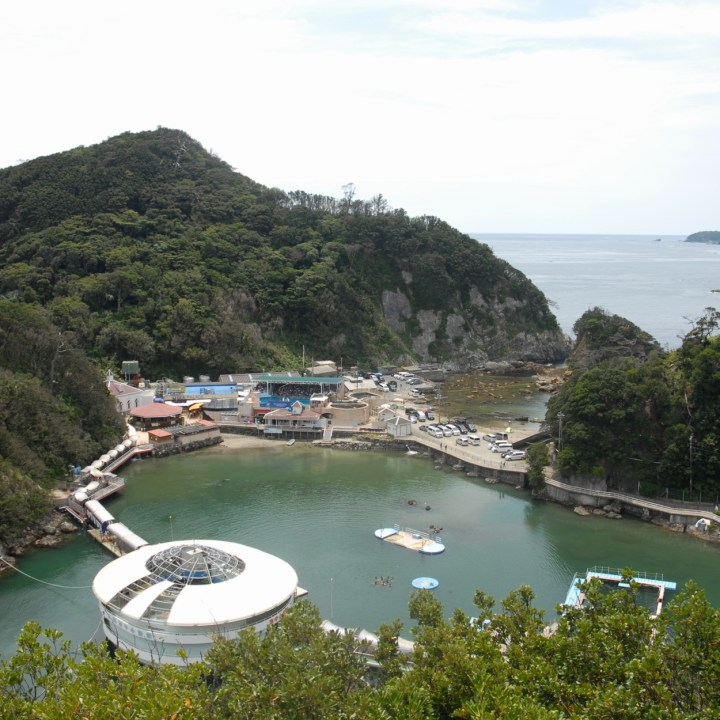 shimoda with kids izu peninsular aquarium