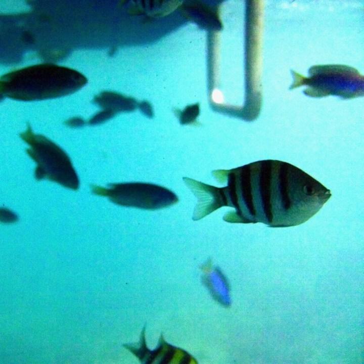 heda japan with kids izu peninsular snorkelling fish