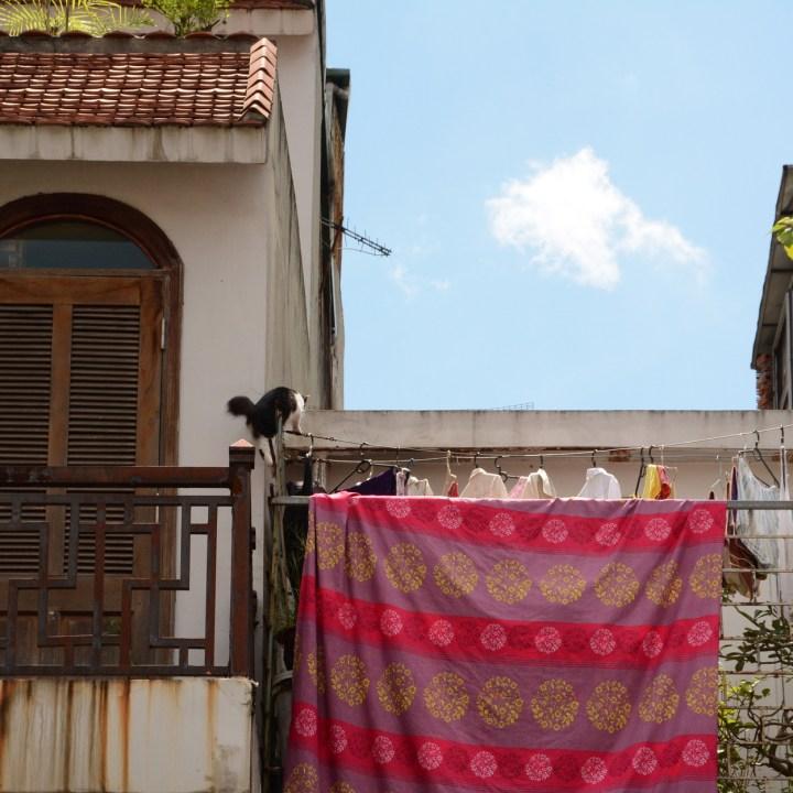 travel with kids vietnam hoi an cat