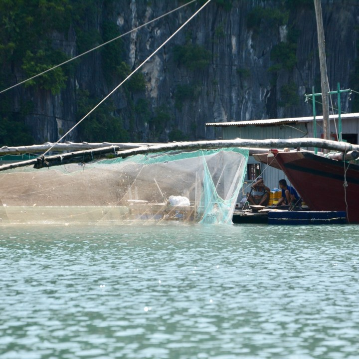 vietnam with kids ha long bay fisher net