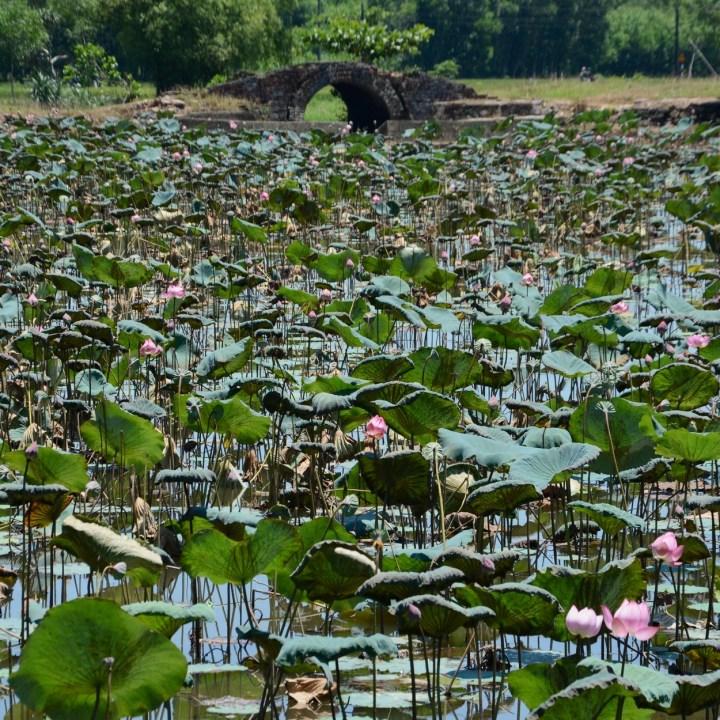 vietnam travel with kids hue lotus pond