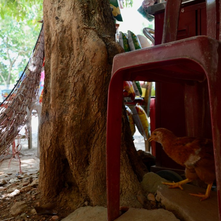 vietnam with kids hue tomb minh mang chicken