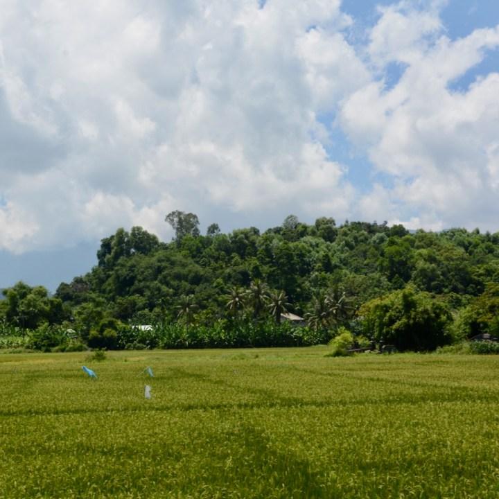 vietnam with kids cai lau lagoon rice paddies