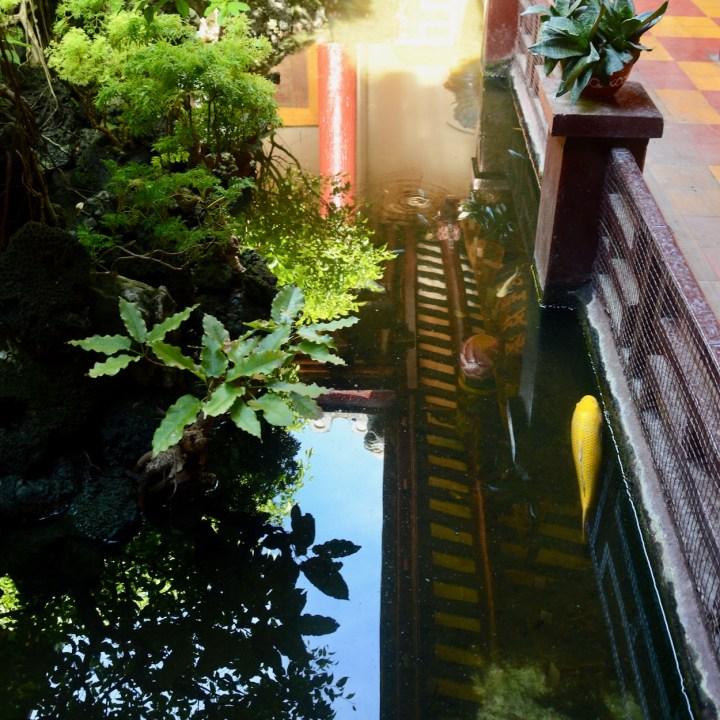 vietnam with kids hoi an phuoc kien koi pond