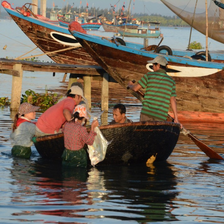 photo tour vietnam hoi an silver fish