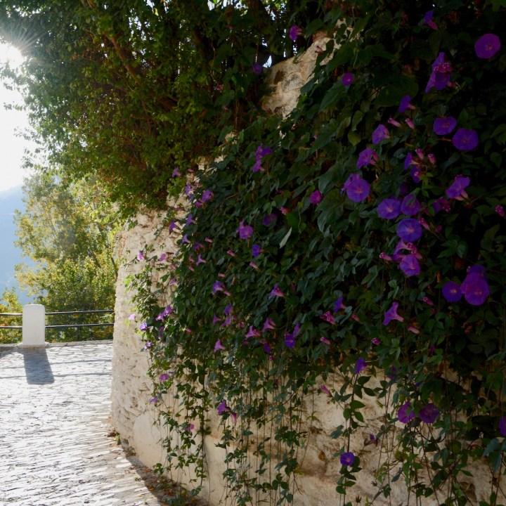 las alpujarras with kids bubion flower wall