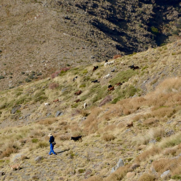 hiking with kids las aplujarras poqueira gorge sheprd life