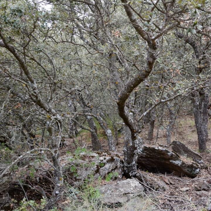 hiking with kids las aplujarras capileira stone oaks