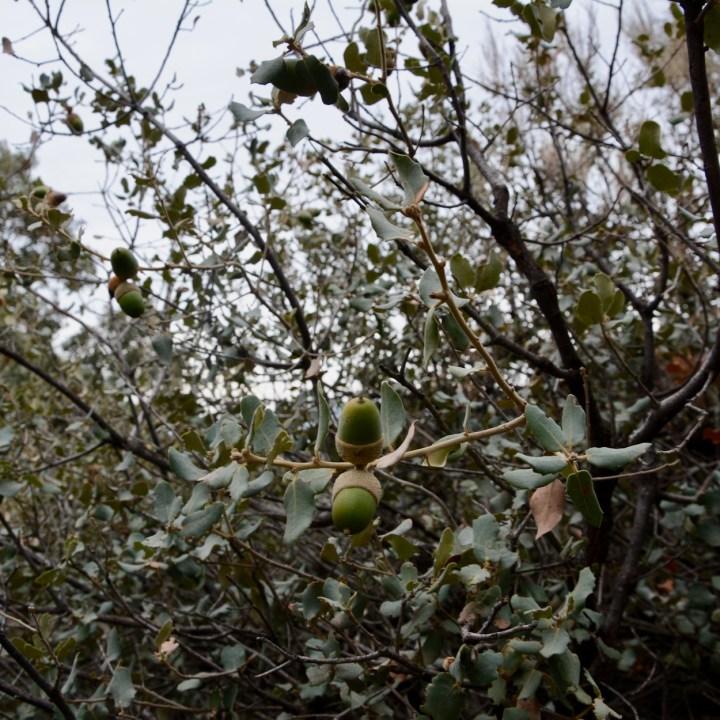 hiking with kids las aplujarras capileira oaks