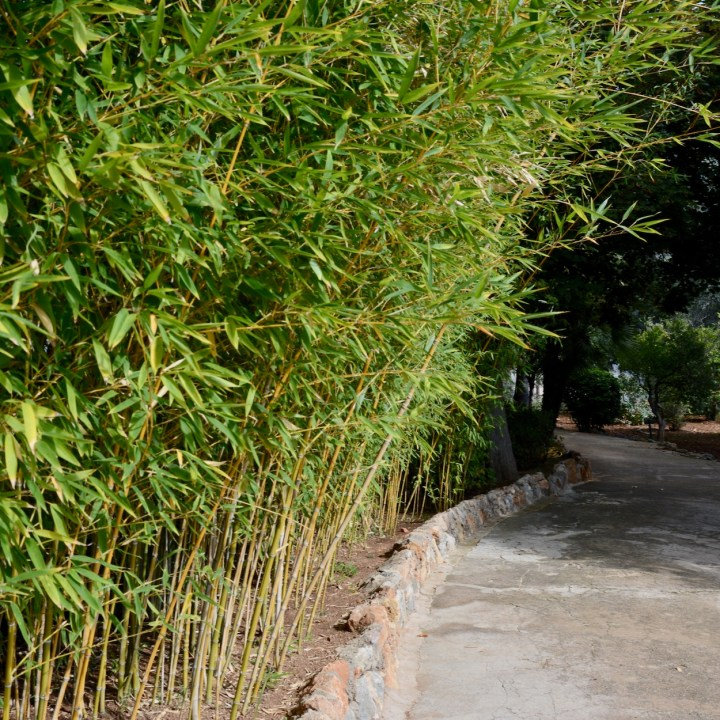 Mallorca with kids gardens alfabia bamboo