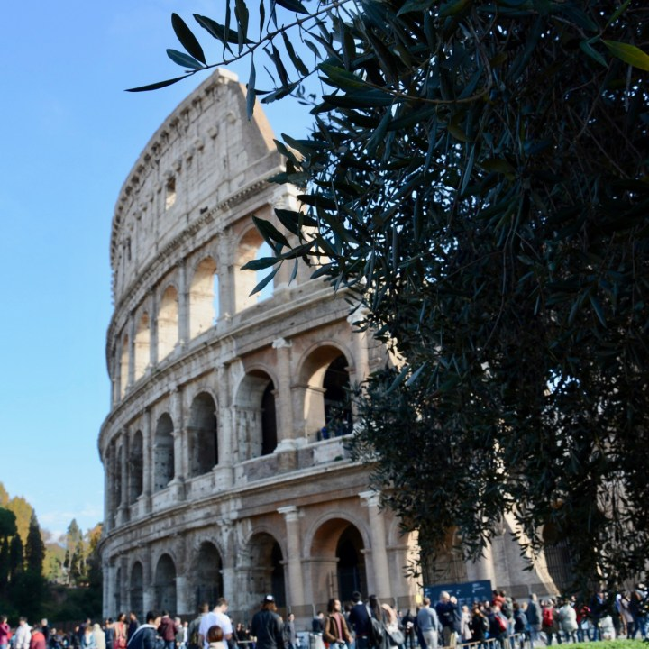 colosseum rome with kids olives