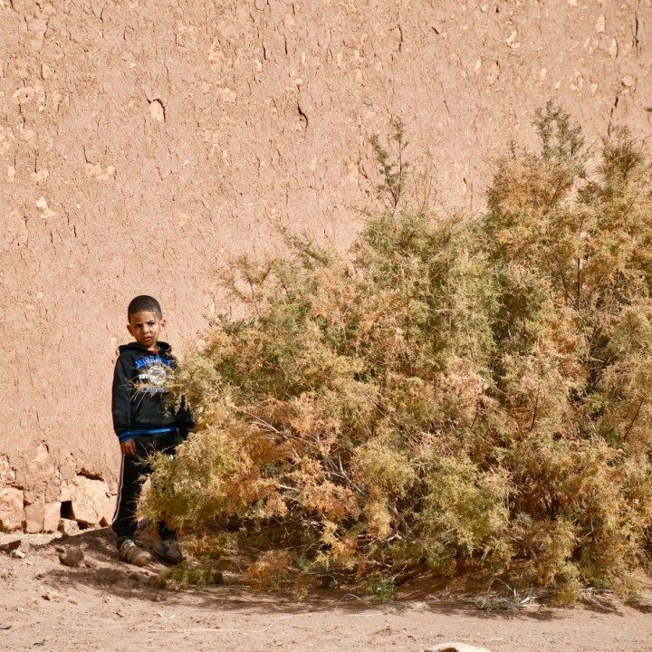 morocco with kids travel tips local boy