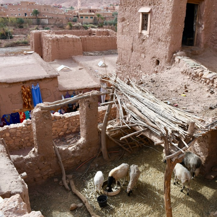 Ait Benhaddou with kids Morocco sheepsty