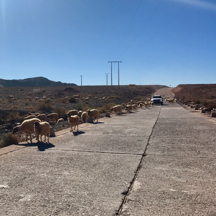 morocco with kids travel tips rush hour