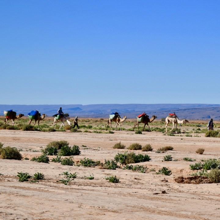 sahara desert erg chigaga with kids camel caravan