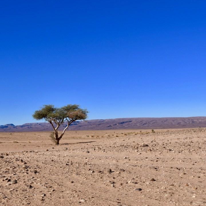 sahara desert erg chigaga with kids lonely tree