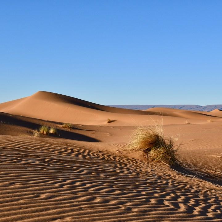 sahara desert erg chigaga with kids grass tufts
