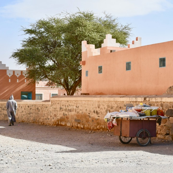 Agdz with kids Morocco olivs for sale