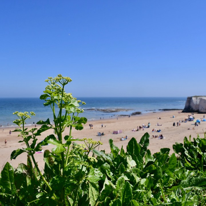 Broadstairs with kids Botany Bay beach