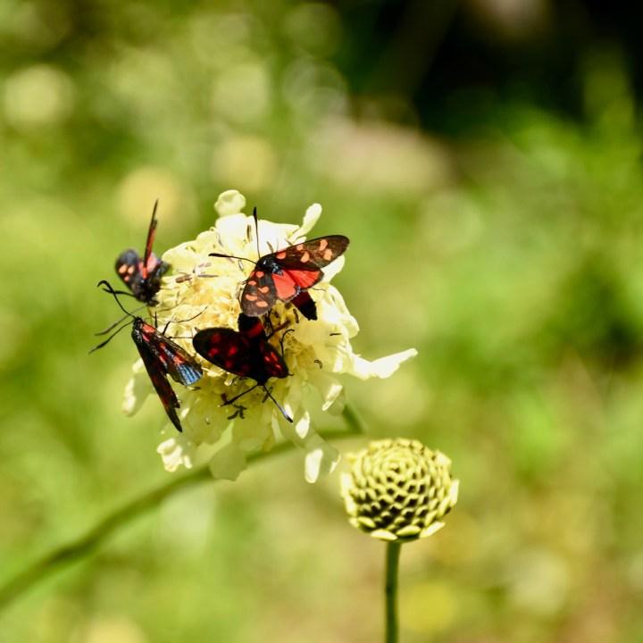 Exploring Georgia with kids Borjomi butterflies