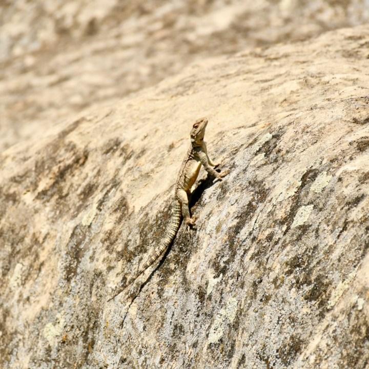 Uplistsikhe cave town with kids lizard