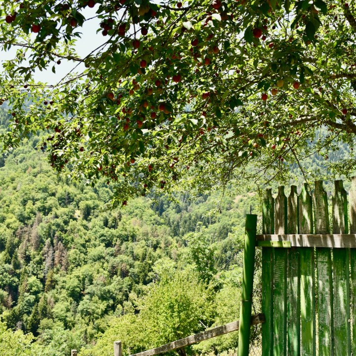 Borjomi with kids adventure trail orchard