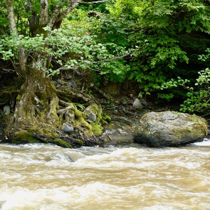 Borjomi with kids adventure trail tree root