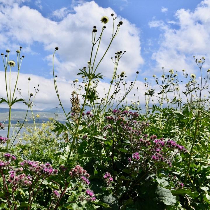 Lake Tabatskuri Georgia with kids flower power