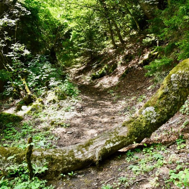 Askuri Georgia snowshoe hiking trail track