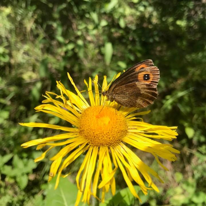 Askuri Georgia snowshoe hiking trail butterfly