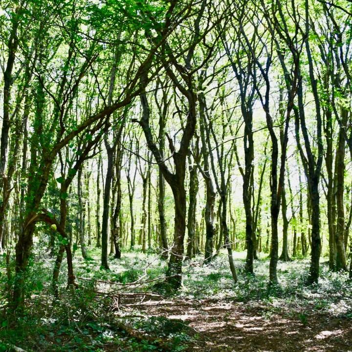 Sataplia Nature Reserve Georgia enchanted forest