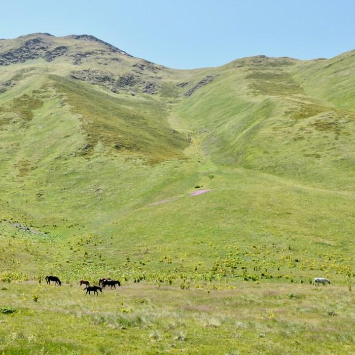 Juta hike wild horses