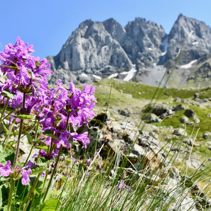 Juta hike flower power