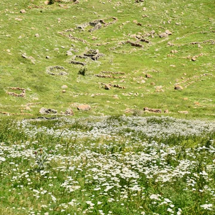 Devdoraki glacier hike flowers