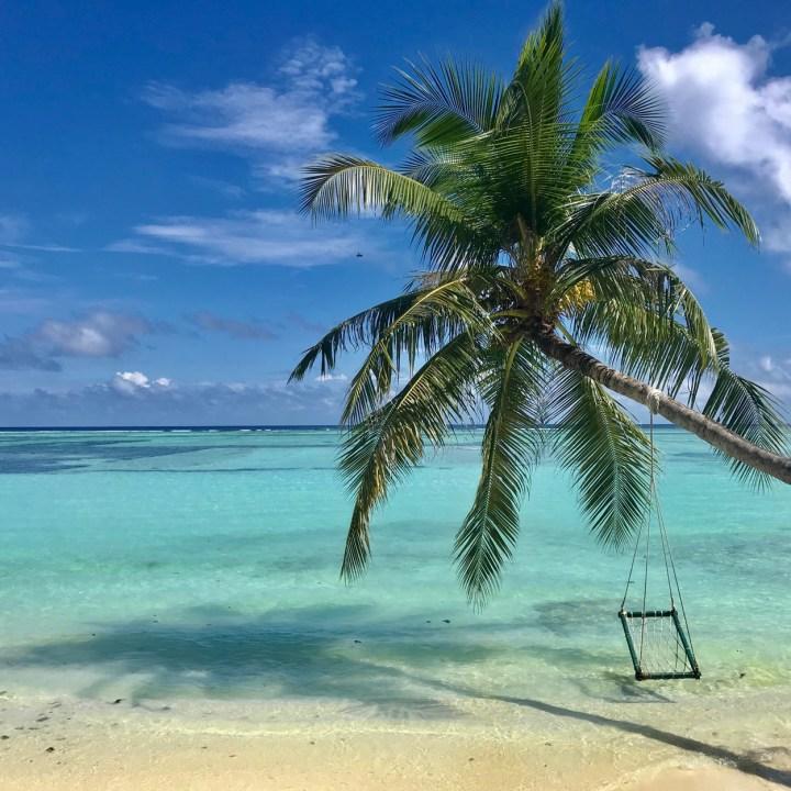 Lux South Ari palm tree