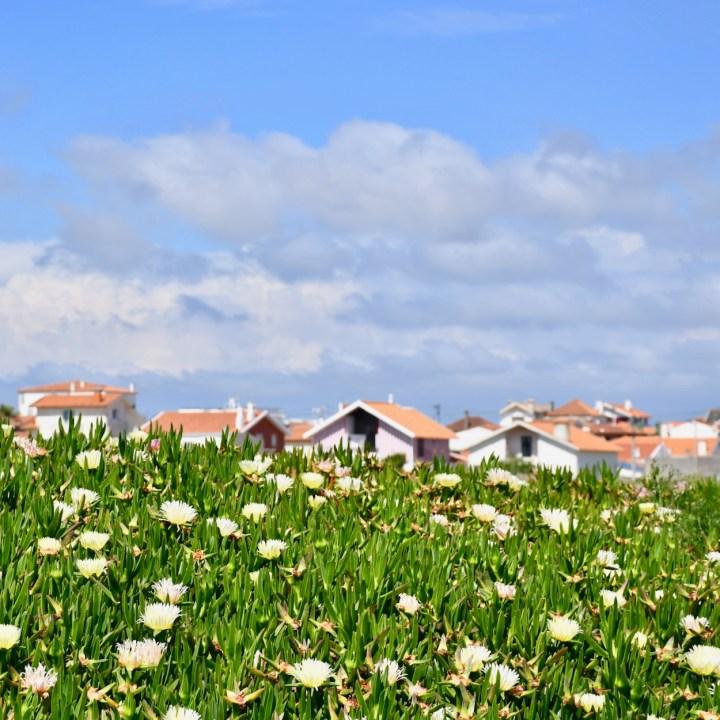 Costa Nova Portugal flower power