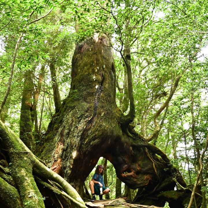 Shiratani Unsuikyo trail hike
