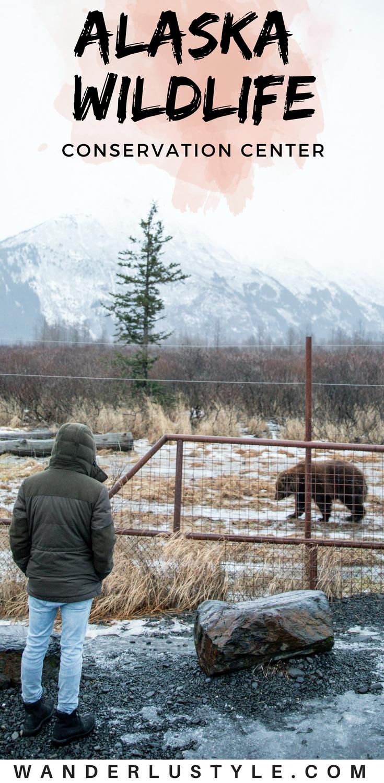 Alaska Wildlife Conservation Center - Alaska Things to do, Alaska wildlife, Anchorage Alaska | Wanderlustyle.com