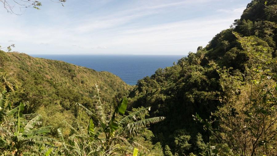 Unterwegs im Küstenwald