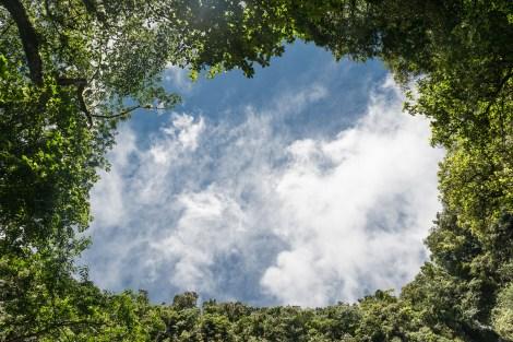 Wald an den Middlehamfalls